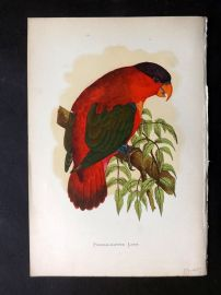 Greene Parrots in Captivity 1887 Hand Col Bird Print. Purple-Capped Lory